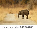 Stock photo young african elephant lost on the gravel road 238944706