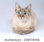 Portrait Of Cute Cat With Blue...