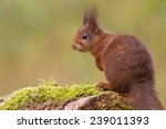 Sitting Squirrel With Tree...