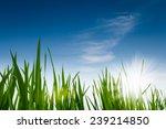 green grass against a blue sky  ... | Shutterstock . vector #239214850