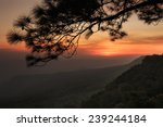 sunset at cliff  with... | Shutterstock . vector #239244184
