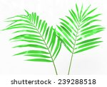 palm tree | Shutterstock . vector #239288518