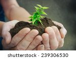 hand and plant | Shutterstock . vector #239306530