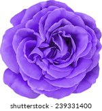 Purple Rose Flower Isolated On...