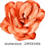 Stock vector red flower isolated on white background vector illustration 239331406
