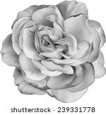 Black And White Rose Flower...