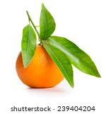 Tangerine With Green Leaves...