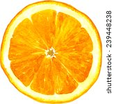 slice of orange drawing by... | Shutterstock .eps vector #239448238