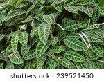 green leaf background  | Shutterstock . vector #239521450