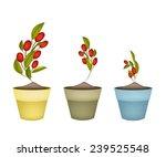 illustrationof fresh red ripe... | Shutterstock .eps vector #239525548