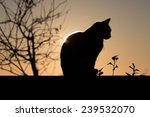 Stock photo black cat outdoor and sunset 239532070