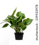flower pots on white background | Shutterstock . vector #239533978
