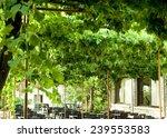 gazebo with creeping vine  | Shutterstock . vector #239553583