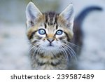 Stock photo little kitten and bokeh a kitten with its tail in bokeh background 239587489