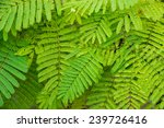 leaf texture  | Shutterstock . vector #239726416