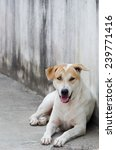 dog stay in shady on sidewalk | Shutterstock . vector #239771416