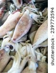 Small photo of Squid, Teuthida, Decapodiformes