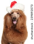Royal Poodle In Santa Christmas ...