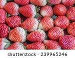 fresh strawberry at tourist... | Shutterstock . vector #239965246