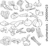 vector collection of vegetables ... | Shutterstock .eps vector #240004423