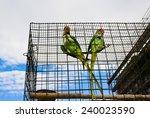 Couple Of Big Green Parrots ...