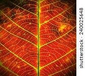 leaf texture grunge style | Shutterstock . vector #240025648