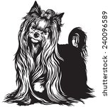 yorkshire terrier black and... | Shutterstock .eps vector #240096589