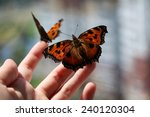 Two Butterflies On A Hand