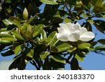 A White Flower Blooming In A...