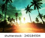 palm plantation on tropical... | Shutterstock . vector #240184504