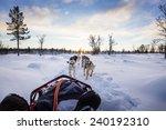 Dog Sledding With Huskies In...