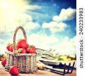 Summer Harvest Of Fresh...