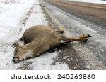 dead deer lying on the winter... | Shutterstock . vector #240263860