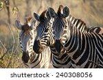 The Three Amigos  Okavango...