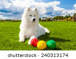 White Samoyed Dog On Green Law...