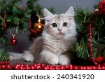 Stock photo siberian cats and kittens on beautiful background perfect for postcards 240341920