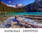 Sunken logs nestled in a bright clear snow-capped mountain lake