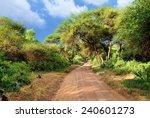 African Dirt Road In Tropical...
