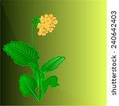 primrose spring flower green...   Shutterstock .eps vector #240642403