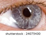 very sharp and detail macro of... | Shutterstock . vector #24075430