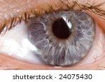 very sharp and detail macro of... | Shutterstock . vector #24075430