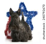 Scottish Terrier Standing With...