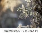 winter framework .frozen tree... | Shutterstock . vector #241026514