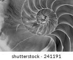 sea shell | Shutterstock . vector #241191