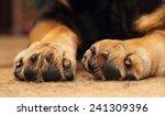 Closeup Of Shepherd Dog\'s Paws...