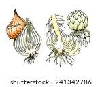 planting seedlings plants.... | Shutterstock . vector #241342786