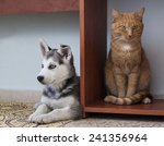 cat and dog friendship   Shutterstock . vector #241356964