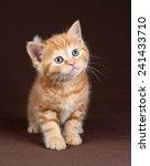 Stock photo ginger kitten 241433710
