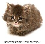 beautiful persian little kitten ... | Shutterstock . vector #241509460