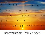 Flock Of Birds On A Background...